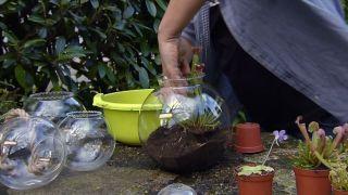 Plantar plantas carnívoras en peceras - Paso 2