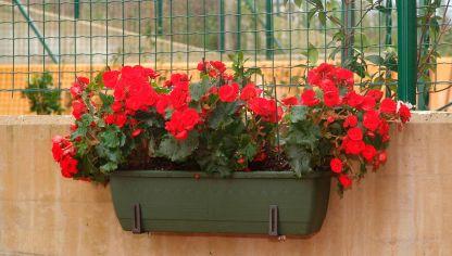 Jardineras en sombra bricoman a - Tipos de jardineras ...