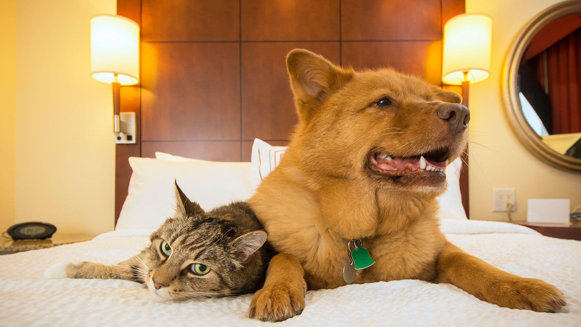 hoteles residencias gatos