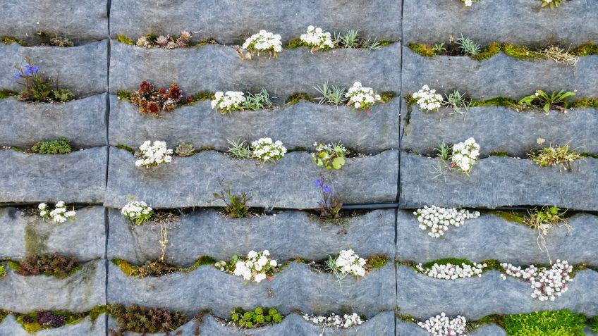 Programa para dise ar jardines verticales casa dise o for Como disenar un jardin vertical