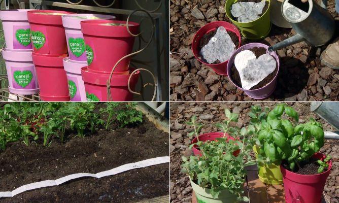 Jardin de plantas aromaticas jardin vertical de hierbas - Plantas aromaticas para jardin ...