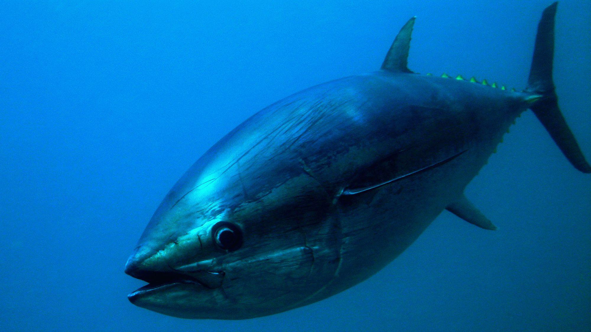 animales océano - peces