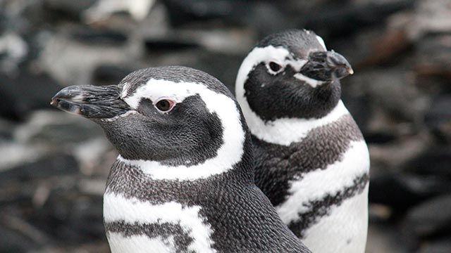 animales océano pingüino