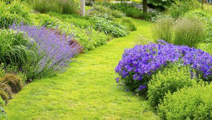 Se puede recuperar la tierra de una jardinera podrida por - Cuando plantar cesped ...