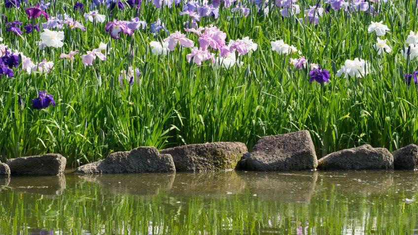 Estanque con lirios de agua decogarden for Estanque de agua para jardin