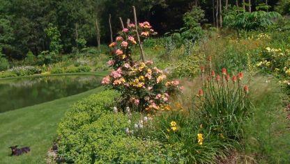 Los rosales en verano hogarmania for Jardin los rosales