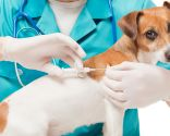 identificación canina microchip - dispositivo