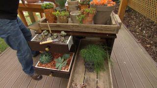 Mueble-minibar con plantas crasas y cactus