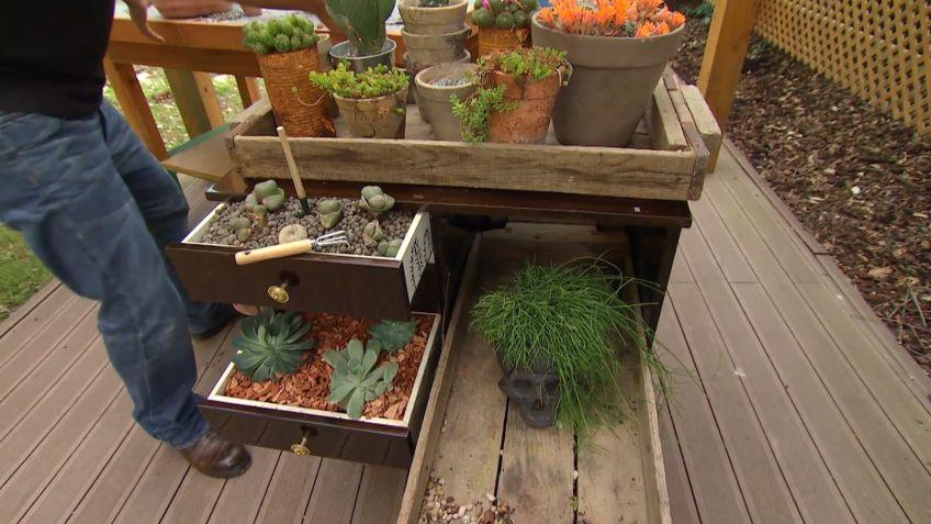 Mueble mini bar con plantas crasas y cactus - Bricomanía