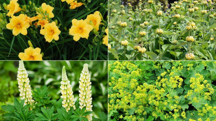 Parterre de plantas vivaces de floración amarilla - Decogarden
