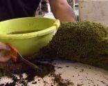Jardín suspendido con bolas de musgo: kokedama - Paso 4