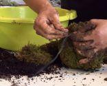 Jardín suspendido con bolas de musgo: kokedama - Paso 5