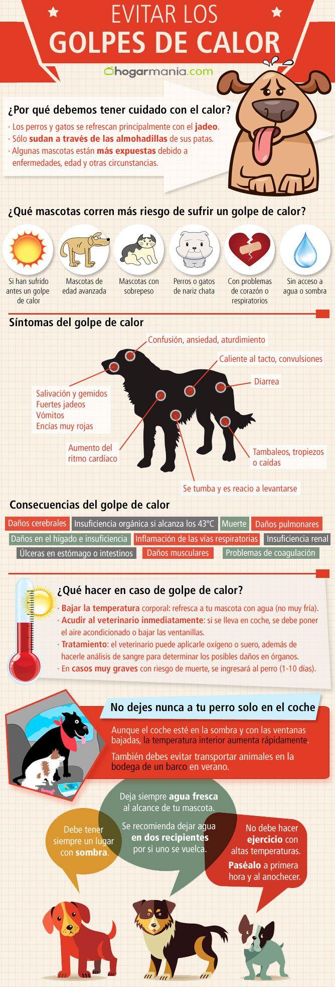 infografía golpe calor perros