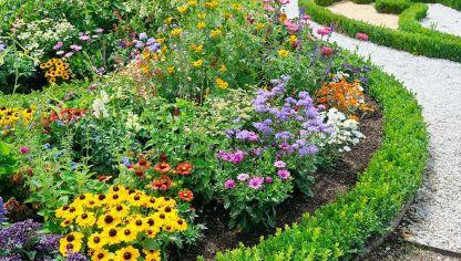 Remedios para combatir las hormigas del jard n hogarmania for Como acabar con las hormigas del jardin