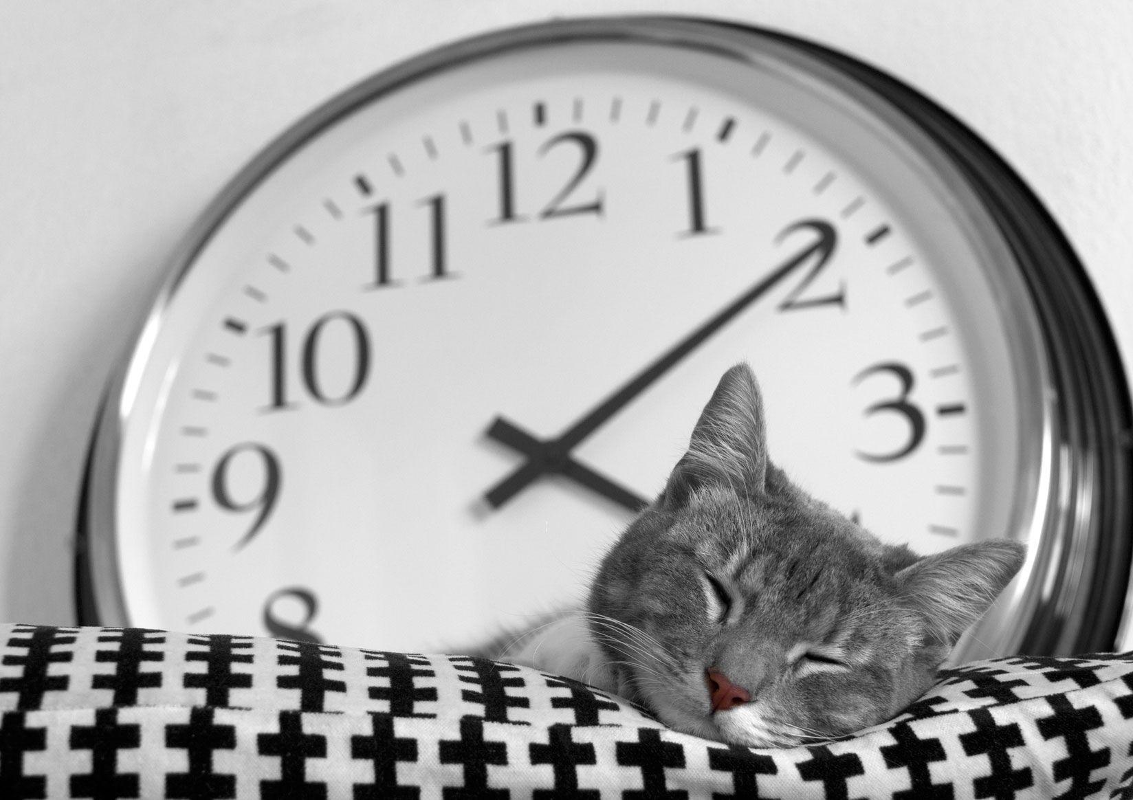 sueño gatos