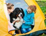 planes con perros vacaciones - camping