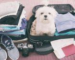 planes con perros verano - viajar