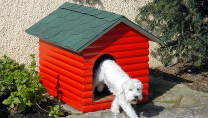 Impermeabilizar balaustrada o muro bricoman a for Casetas de perro bricodepot