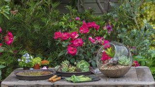 Cuándo sembrar las semillas de cactus