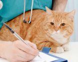 enfermedades gatos mayores