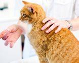 tratamiento enfermedades gatos mayores