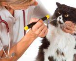 revisión ojos gatos mayores