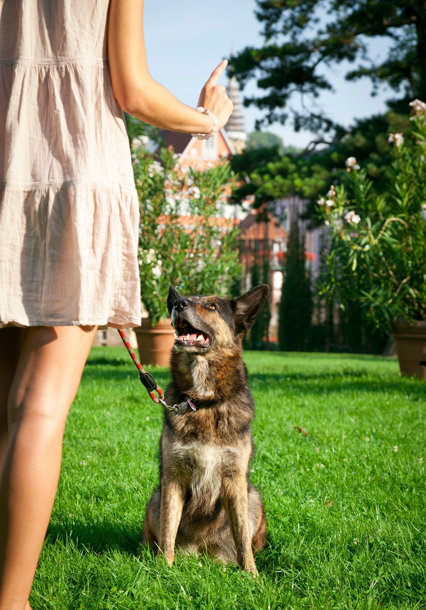 perros enseñar a dar pata - 2