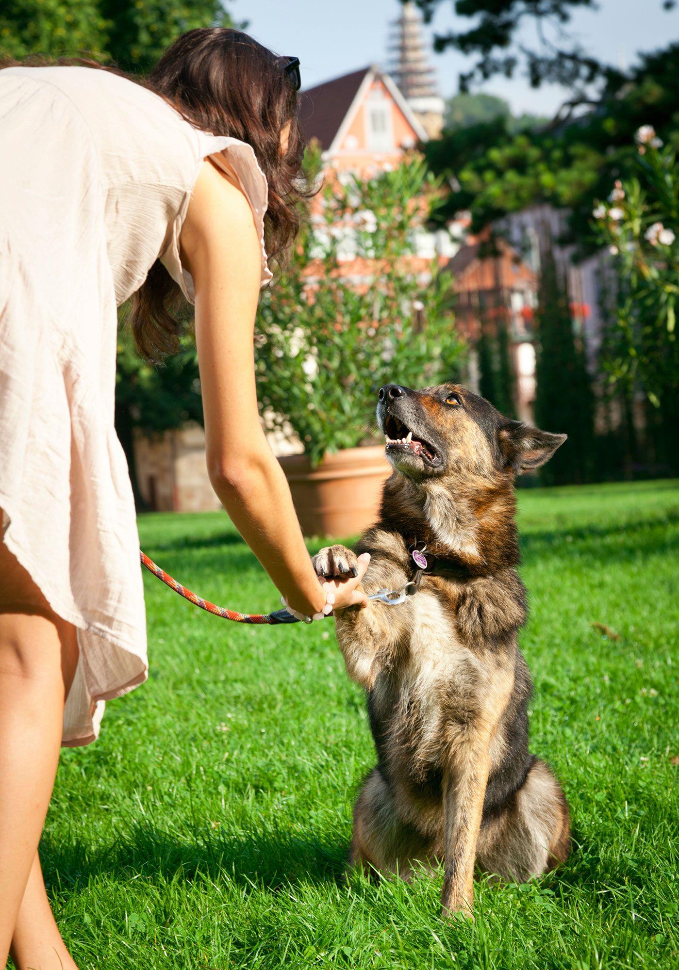 perros dar la pata - 3
