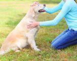 educación canina en positivo - respeto