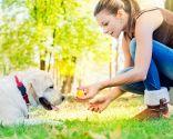 adiestramiento canino en positivo - diversión