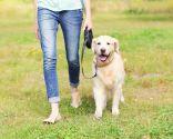 educación canina en positivo - sin castigos