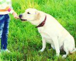 educación canina en positivo - recompensas