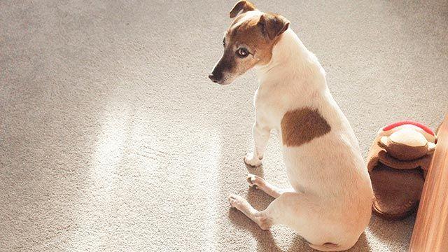ansiedad separación perros - sin castigos