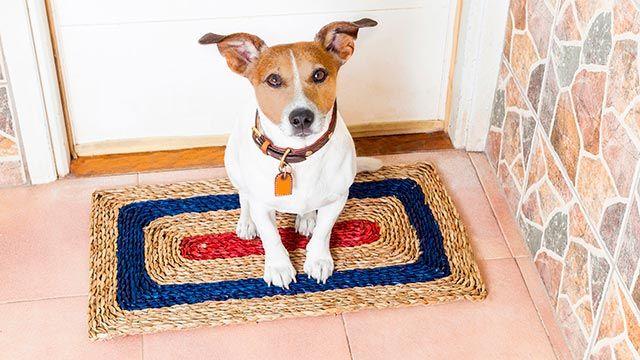 ansiedad separación perros - irse de casa