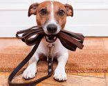 corregir ansiedad separación perros - ejercicio