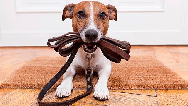 ansiedad separación perros - ejercicio