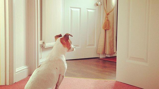 consejos otoño mascotas - ansiedad separación