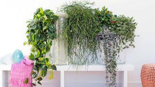 Plantas colgantes para el interior de casa