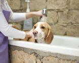 frecuencia baño perros