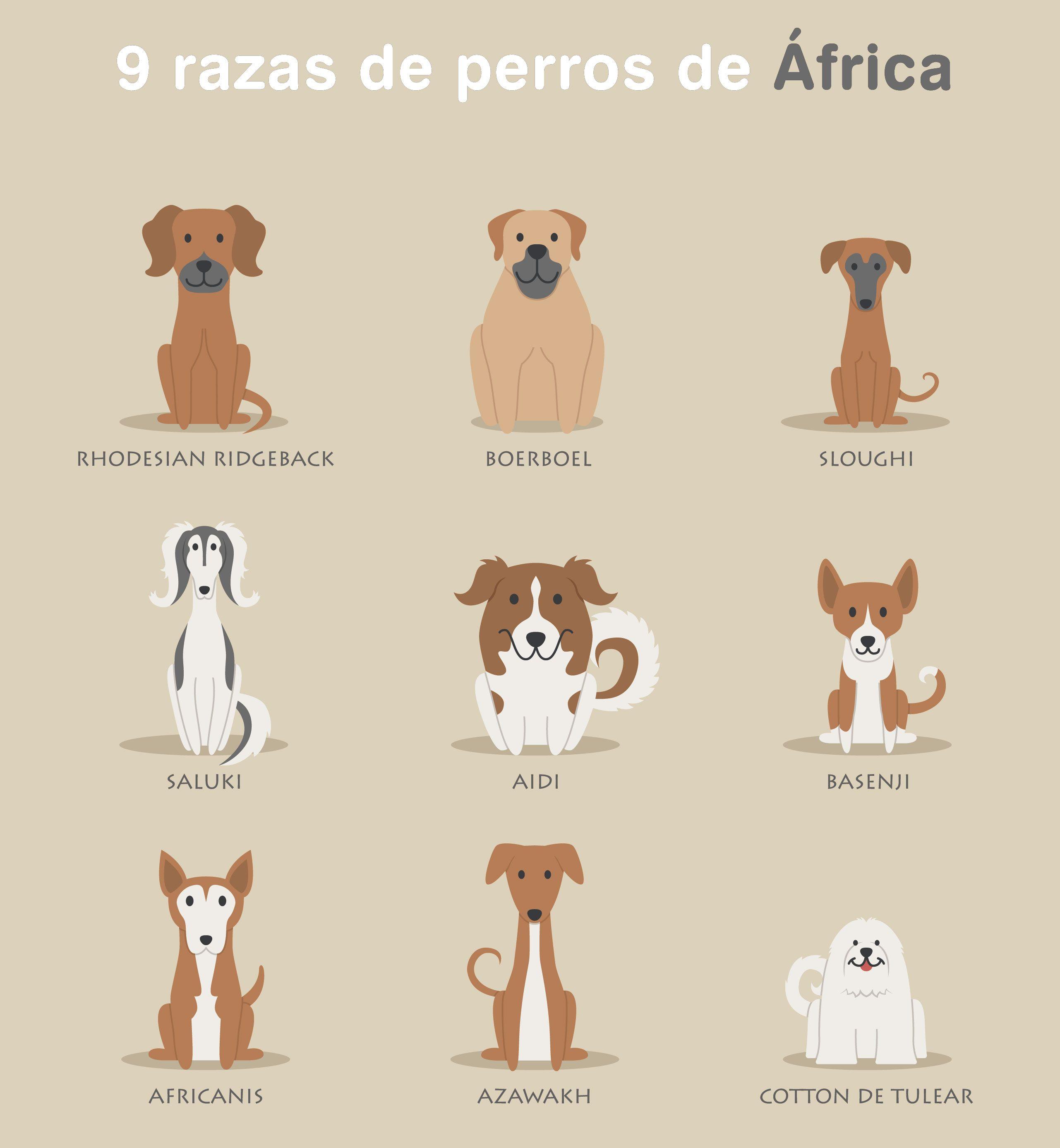 9 razas de perros de África