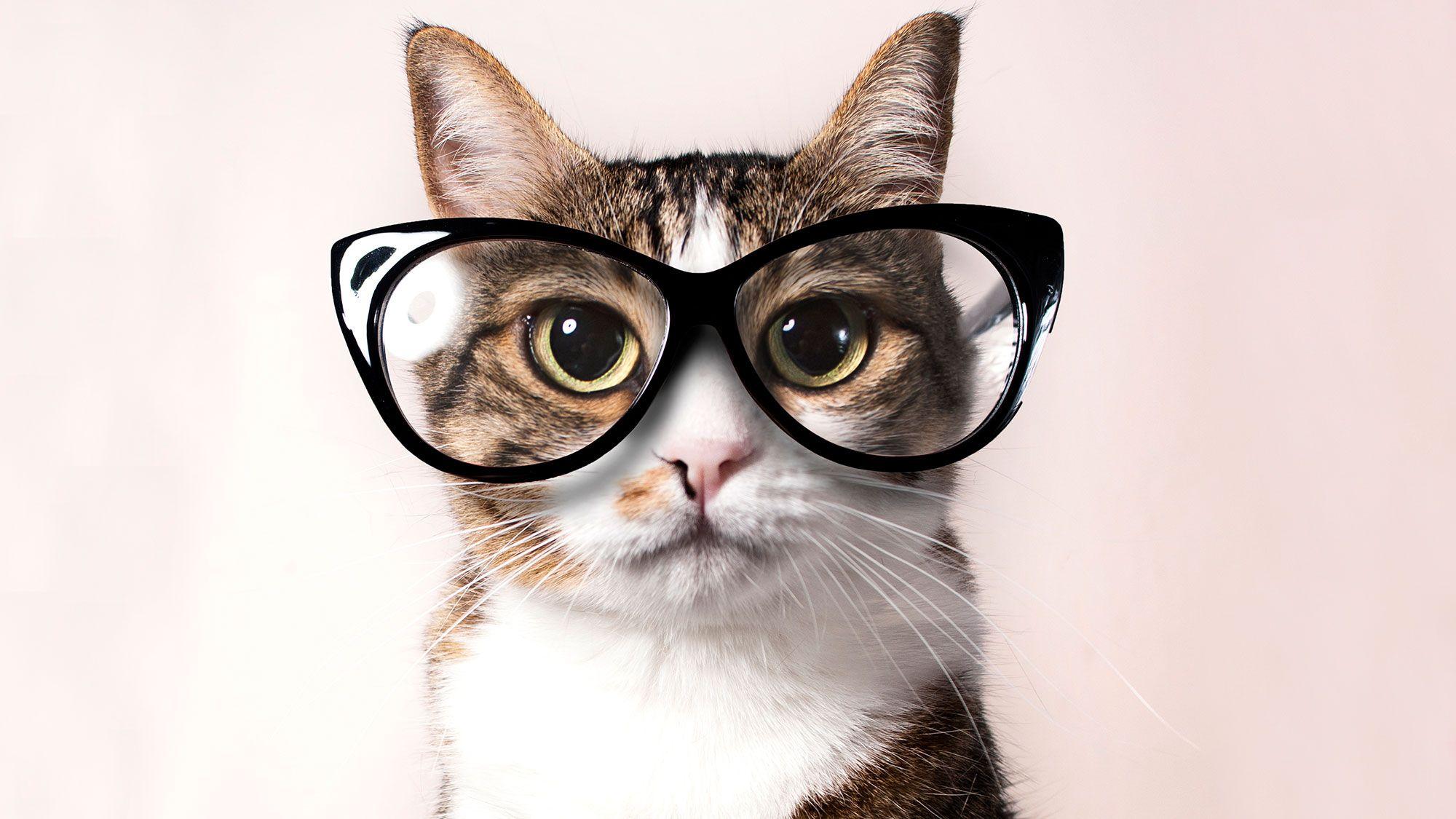 gato visión