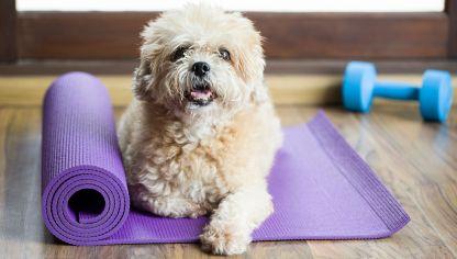 6 poses de yoga para aliviar el dolor de espalda  hogarmania