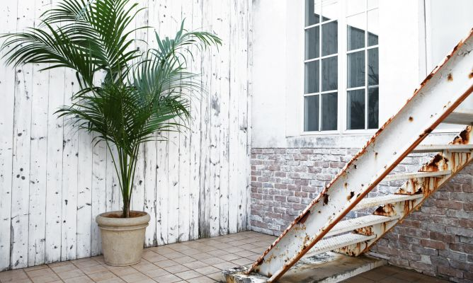 Kentia una palmera de interior muy bella hogarmania - Plantas de interior palmeras ...