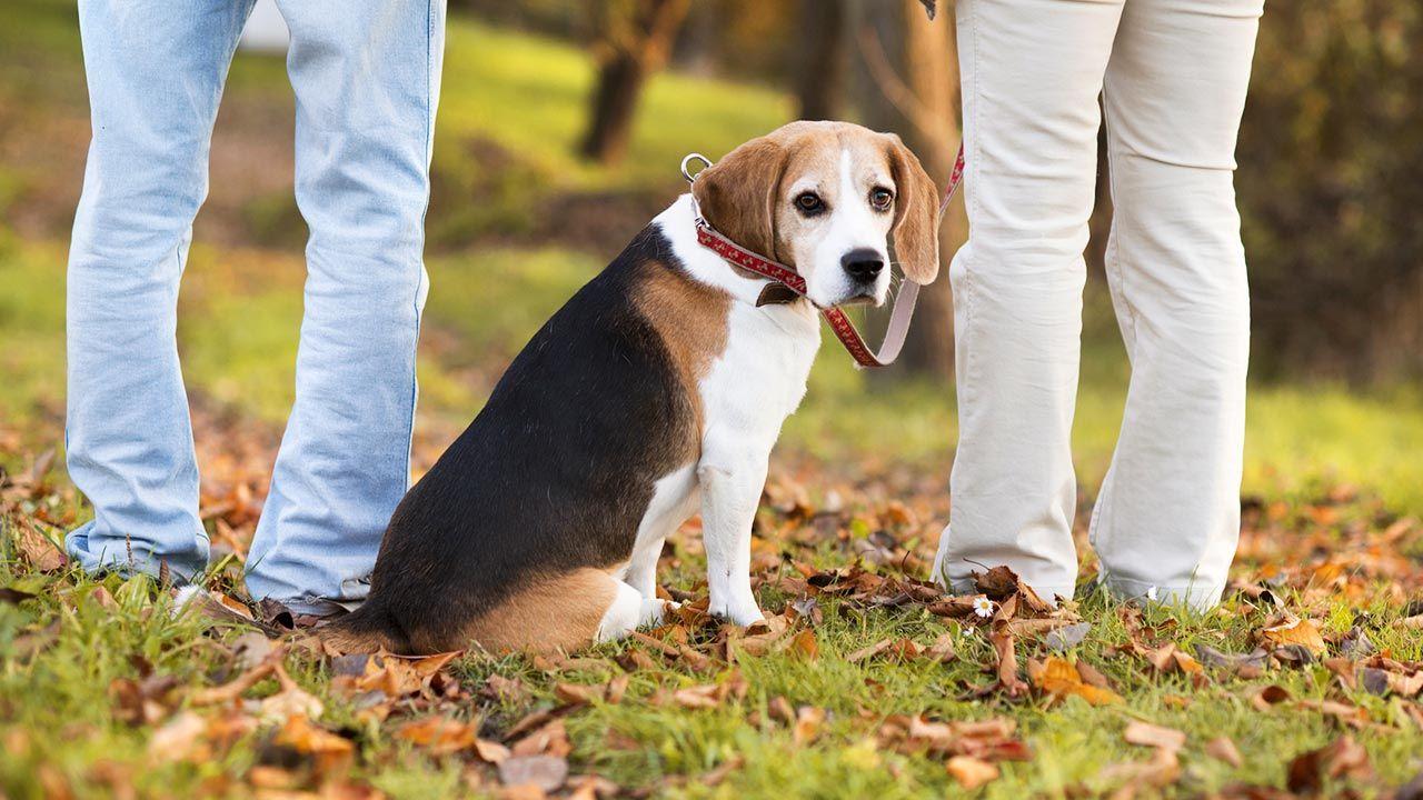 separación perros