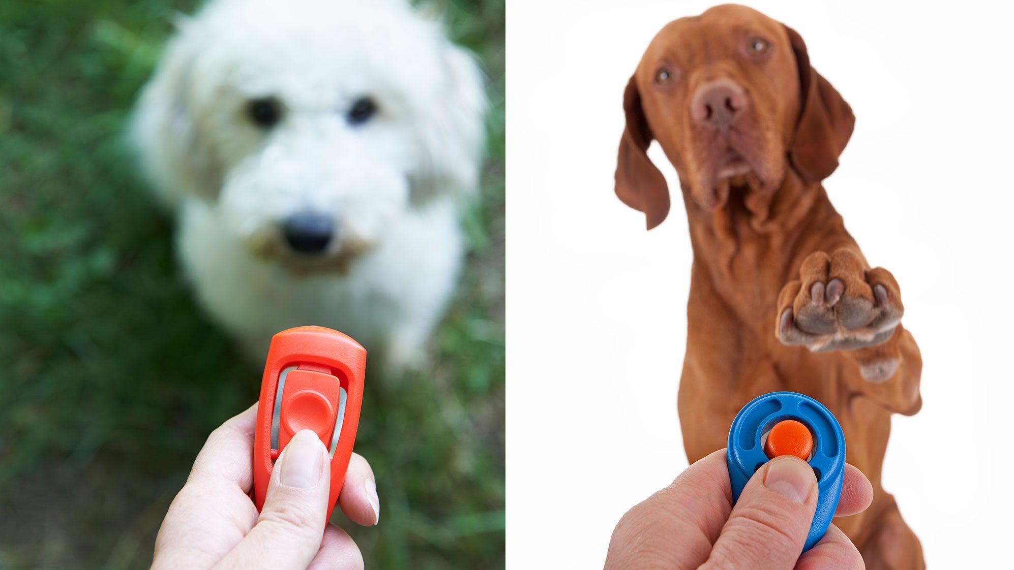 educar perro con clicker
