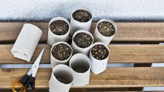 Semilleros con papel reciclado