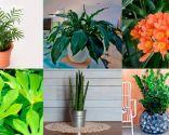 temas jardín 2016 - plantas resistentes