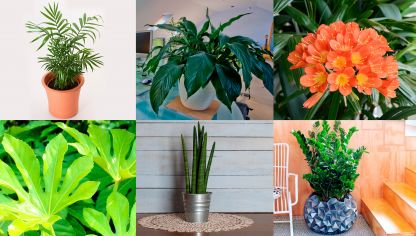 Potos o photos una planta de interior muy resistente - Plantas exterior resistentes ...