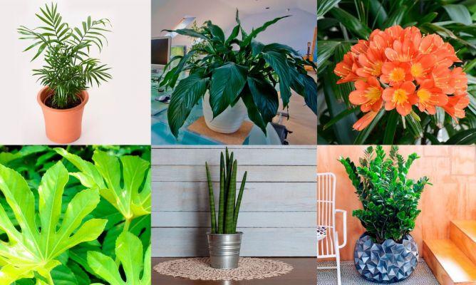 6 plantas muy resistentes y f ciles de cuidar decogarden