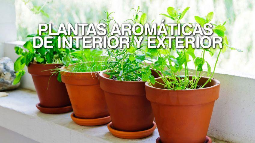 Plantas Aromáticas De Interior Y Exterior Bricomanía